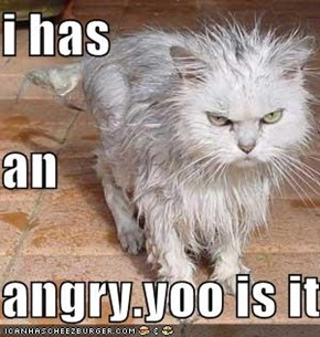 i has  an  angry.yoo is it