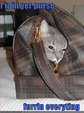 I iz in yer purse  furrin everyting