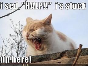 """i sed, """"HALP!!""""  i's stuck   up here!"""