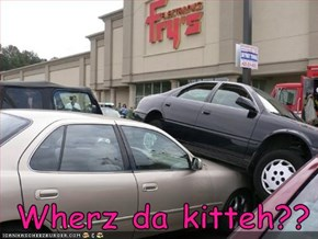 Wherz da kitteh??
