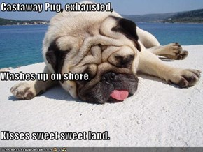 Castaway Pug, exhausted, Washes up on shore, Kisses sweet sweet land.