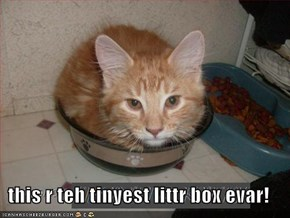 this r teh tinyest littr box evar!