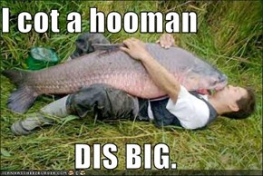 I cot a hooman  DIS BIG.