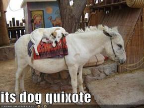 its dog quixote