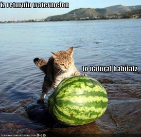 iz returnin watermelon to natural habitatz