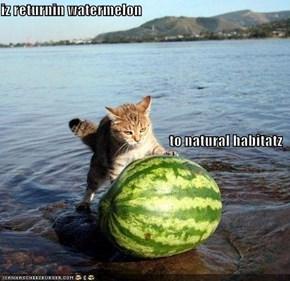 iz returnin watermelon to natural habitatz