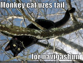 Monkey cat uzes tail  for navigashun