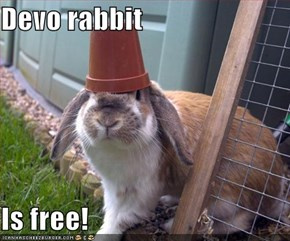Devo rabbit  Is free!