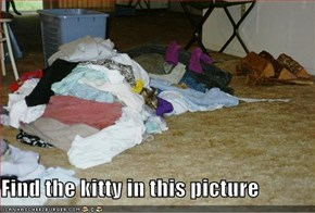 Find the kitty in this picture