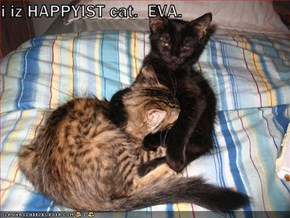 i iz HAPPYIST cat.  EVA.
