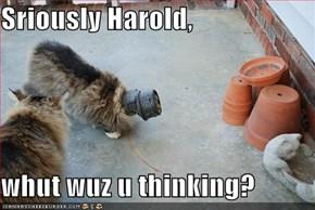 Sriously Harold,  whut wuz u thinking?