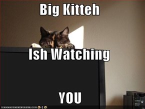 Big Kitteh Ish Watching  YOU