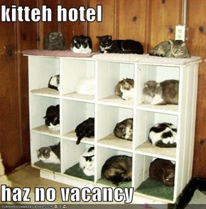 kitteh hotel  haz no vacancy
