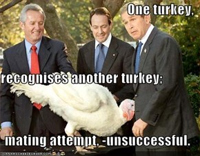 One turkey, recognises another turkey; mating attempt, -unsuccessful.