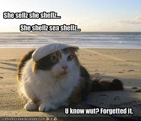 She sellz she shellz...