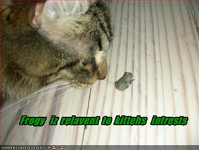Frogy   iz  relavent  to  kittehs   intrests