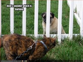 dont u wonder which is barking