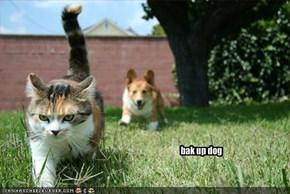 bak up dog