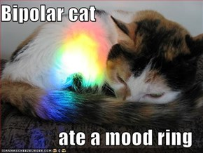 Bipolar cat  ate a mood ring