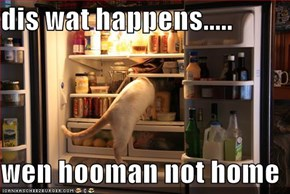 dis wat happens.....  wen hooman not home
