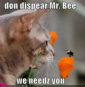 don dispear Mr. Bee  we needz you