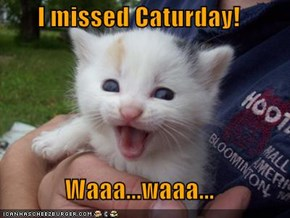 I missed Caturday!  Waaa...waaa...