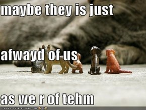 maybe they is just  afwayd of us  as we r of tehm