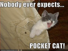 Nobody ever expects...  POCKET CAT!