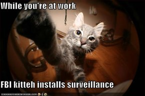 While you're at work  FBI kitteh installs surveillance