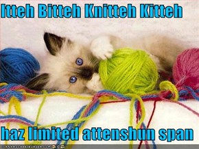 Itteh Bitteh Knitteh Kitteh  haz limited attenshun span