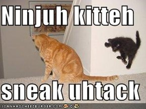 Ninjuh kitteh   sneak uhtack