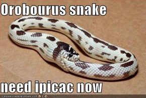Orobourus snake  need ipicac now