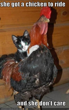 she got a chicken to ride  and she don't care