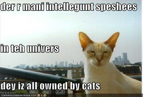 der r mani intellegunt speshees in teh univers dey iz all owned by cats