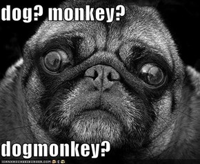 dog? monkey?  dogmonkey?