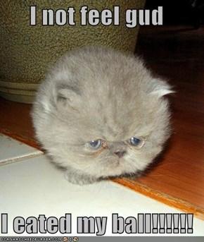I not feel gud  I eated my ball!!!!!!