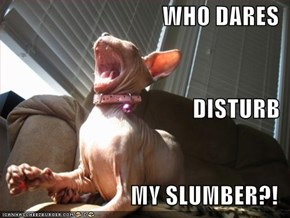 WHO DARES DISTURB MY SLUMBER?!