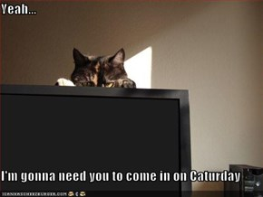 Yeah...   I'm gonna need you to come in on Caturday
