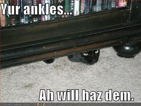 Yur ankles...  Ah will haz dem.