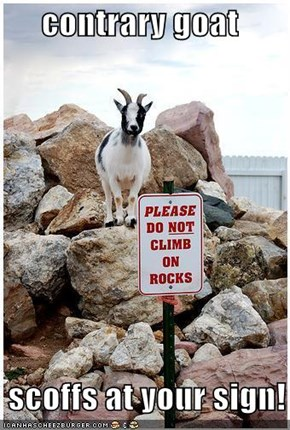 contrary goat   scoffs at your sign!
