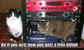 An if yoo actz now yoo getz a free kitteh