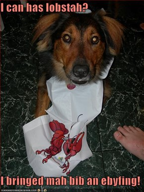 I can has lobstah?  I bringed mah bib an ebyfing!
