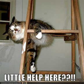LITTLE HELP HERE??!!