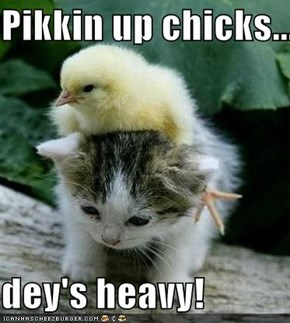 Pikkin up chicks.....  dey's heavy!