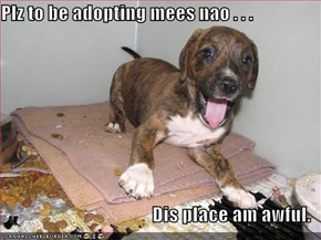 Plz to be adopting mees nao . . .  Dis place am awful.