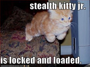 stealth kitty jr.  is locked and loaded.