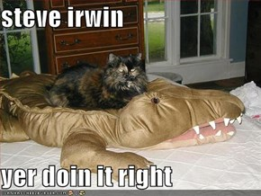 steve irwin  yer doin it right
