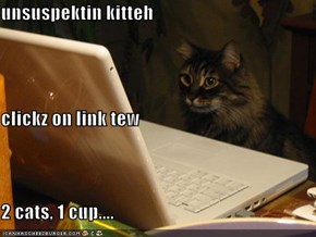 unsuspektin kitteh clickz on link tew 2 cats, 1 cup....