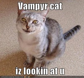 Vampyr cat  iz lookin at u