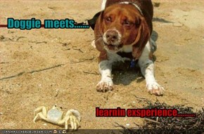 Doggie  meets.......